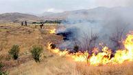 سوختن 15 اصله درخت در آتش سوزی مراتع تندوره