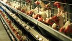 قیمت مرغ و قیمت تخم مرغ در بازار اعلام شد
