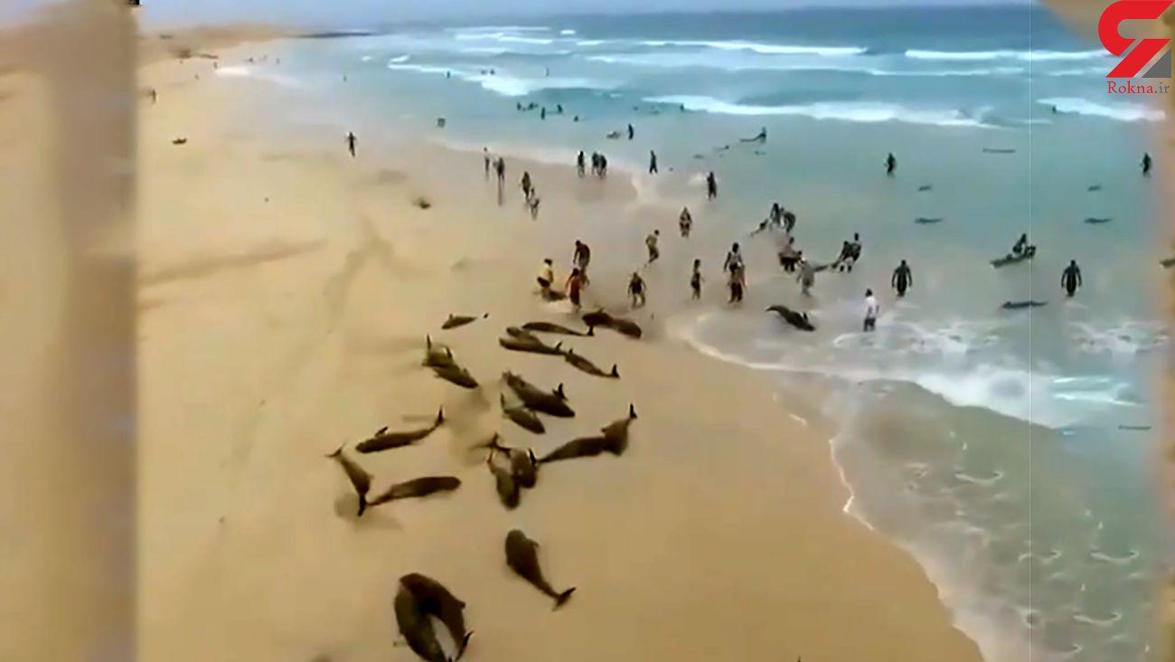 فیلم خودکشی دسته جمعی دلفین ها را ببینید