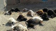 ریزش آوار جان  150 گوسفند در قاینات را گرفت