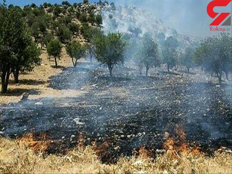 4 هزار متر از اراضی جنگل کمان گرکلا قائمشهر در آتش سوخت