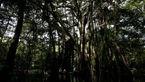 ماجرایی عجیب و باورنکردنی درباره درختان