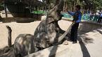 ۷ باغ وحش در کشور تعطیل شد !