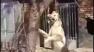 فیلم وحشتناک 16+ / به دار آویختن سگ بیچاره توسط خانواده بیرحم