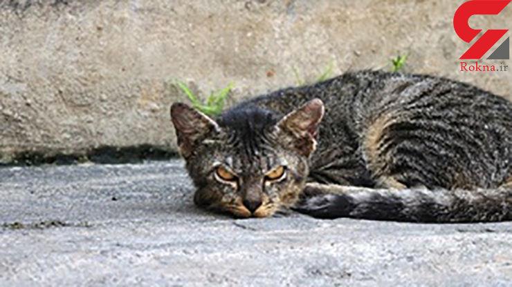 گربه های استرالیایی خطر بزرگی برای  محیط زیست شده اند