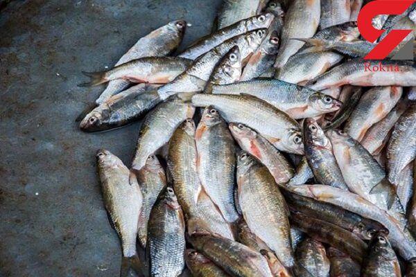 دستگیری 2 متهم جوان در آستارا و کشف 8 تن ماهیی غیر بهداشتی