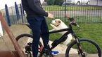 دوچرخه سواری متفاوت و خنده دار سگ خانگی +فیلم و عکس
