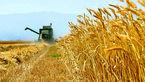 افزایش ۴ درصدی قیمت جهانی گندم/صادرات ۶۰ درصد رشد کرد