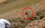 مشاهدە خرس قهوەای در روستای کانی رش اشنویە + فیلم