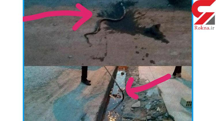 عکسی وحشتناک از حمله مارهای سمی به پلدختر سیل زده! + جزییات