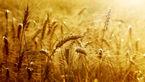 ثبت رکورد جدید تولید غلات در جهان