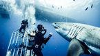 این عکاس یکی از خطرناک ترین عکس های جهان را ثبت کرد+تصاویر