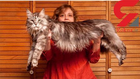 ۱۰ عکس از بزرگ ترین و عجیب ترین حیوانات خانگی جهان + تصاویر