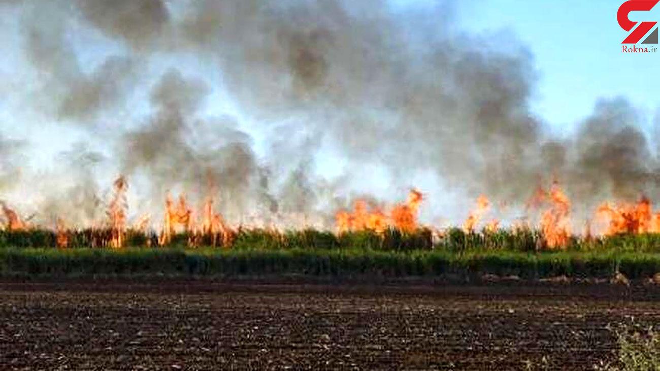 آتش سوزی برگ در یکی از روستاهای اهواز / 100 نخل در آتش سوخت