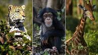 33 گونه جانوری حیات وحش حیوانات در معرض انقراض است