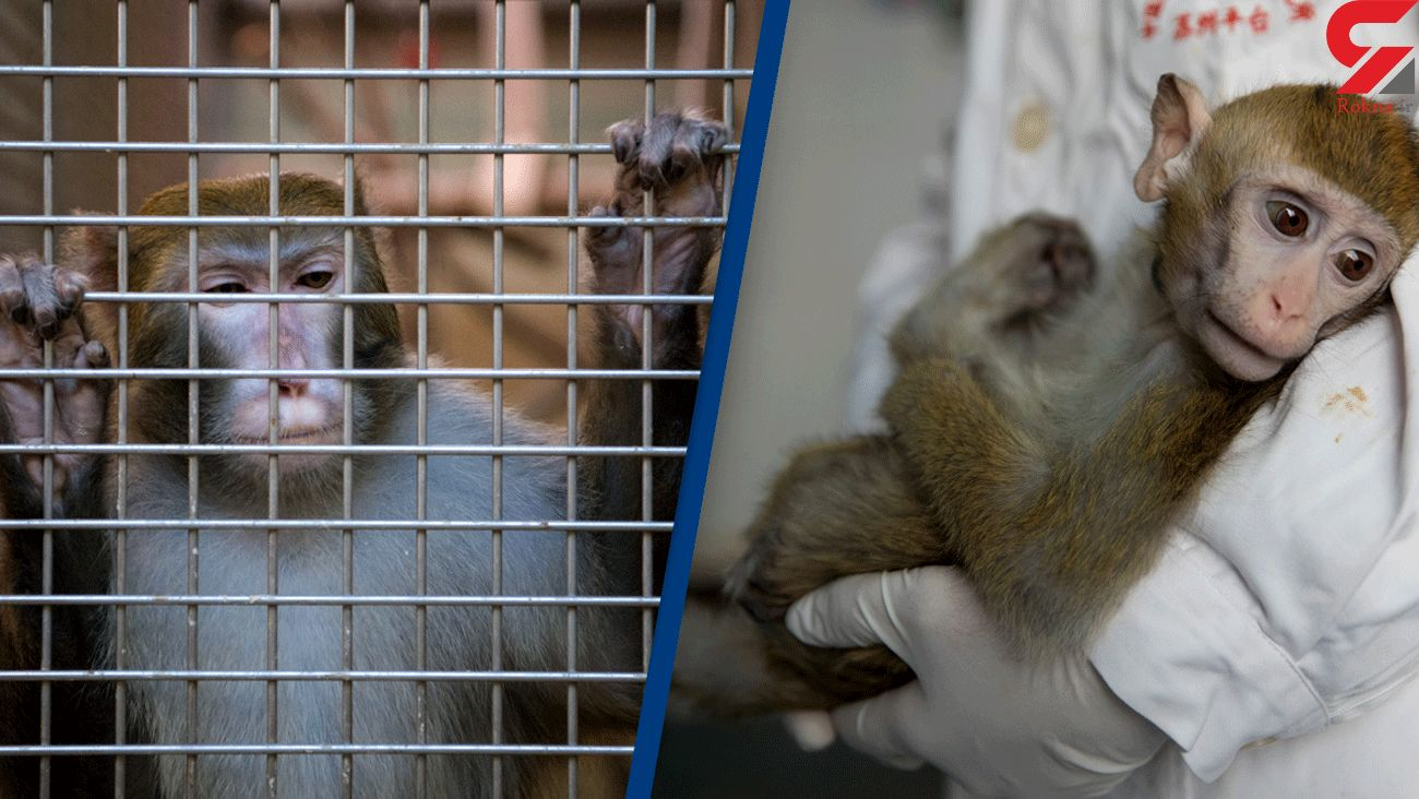 All 27 monkeys held at NASA research centre killed in one day in 2019, report claims