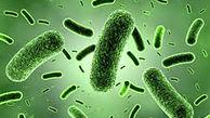 آلوده ترین عضو بدن چیست؟ + عکس