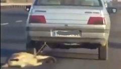شکنجه بیرحمانه سگ توسط راننده خودروی زنجانی +فیلم