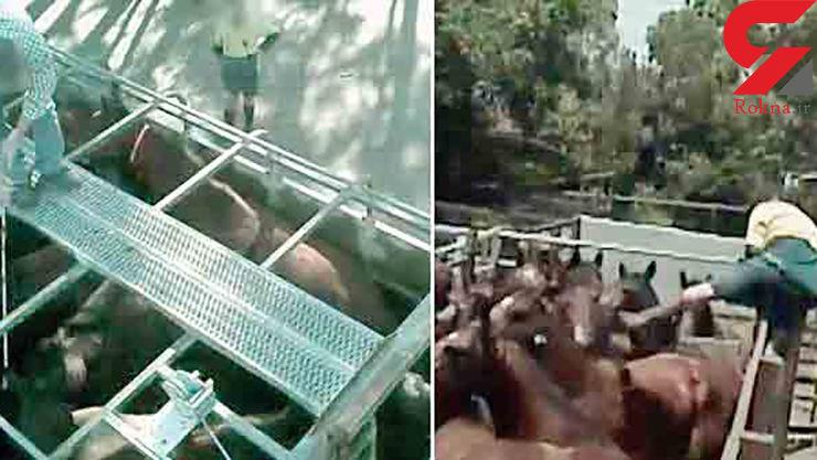 کشتن اسبها برای تهیه غذای حیوانات