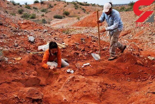 کشف غول پیکرترین فسیل یک دایناسور گیاهخوار