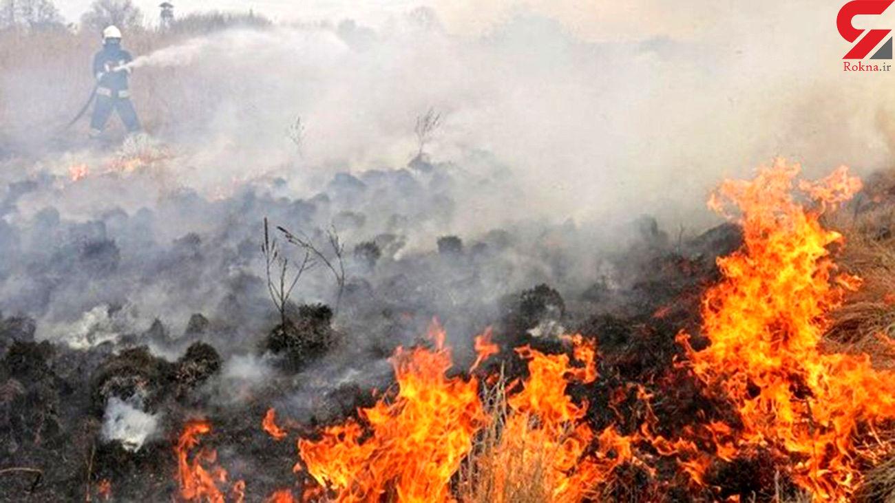 آتشسوزی مجدد جنگلهای بلوط بلند چهارمحالوبختیاری
