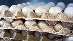هشدار افزایش قیمت مرغ به 30 هزار تومان با حذف ارز 4200 تومانی