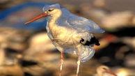 خفگی جانوران با کیسه های پلاستیکی