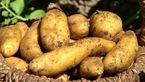 راهکاری ساده برای جلوگیری از جوانه زدن سیب زمینی