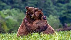 عاشقانه های 2 خرس زیر باران + عکس