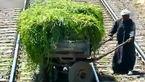 راهور قطار یک خانواده را از مرگ نجات داد + فیلم