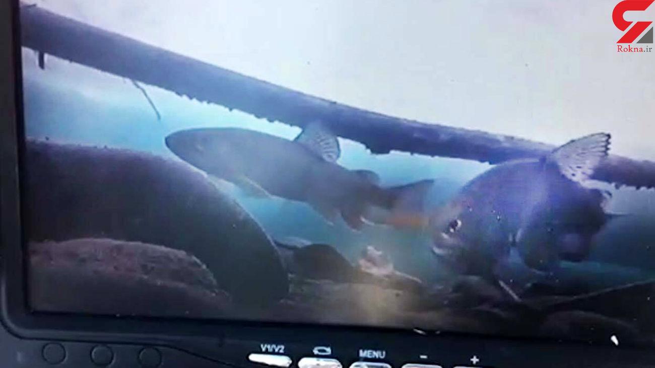 ابتکار 2 ماهیگیر برای صید ماهی + فیلم