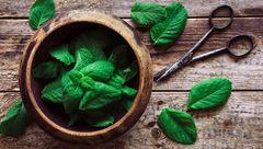 خوشبوترین سبزی ضد تهوع