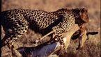 قاتلان بلفطره حیات وحش را بشناسید +عکس