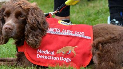 سگها چگونه میتوانند زندگی افراد دیابتی را نجات دهند؟