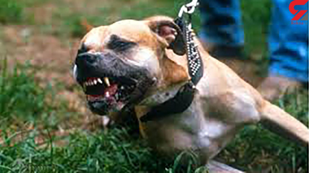در صورت حمله سگ چه کار باید کرد؟