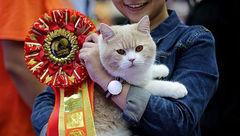 برگزارکنندگان «فشن شو گربهها» چه چیزی را انکار میکنند؟