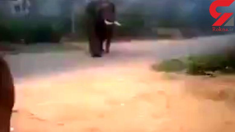فرار فیل از دست سگ + فیلم واقعی