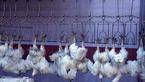 نرخ مرغ کاهش یافت / قیمت به ۷۳۵۰ تومان رسید