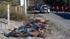 کشف جسد 8 مرد و 3 زن عریان در لب مرز +عکس