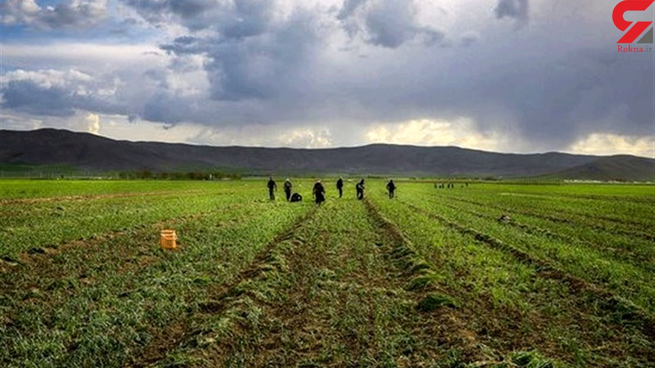 FAO Assists Iranian Farmers with Improving Agriculture Productivity