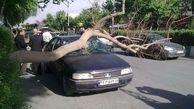 باد شدید 7 میلیارد ریال به استان اصفهان خسارت زد
