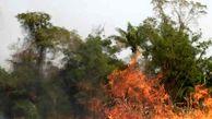 مراتع طارم در آتش سوخت