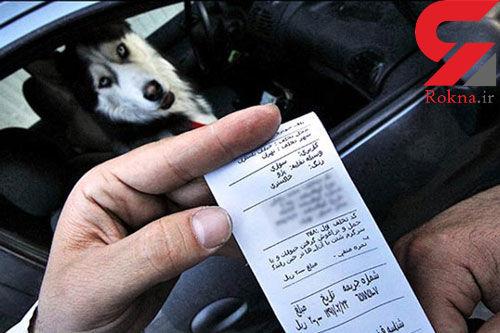 برخورد پلیس راهور با سگگردانی در خودرو
