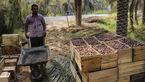نصف شدن قیمت خرما بعد از ماه رمضان/فروش خرمای پارسال با ترفندهای جدید