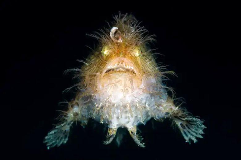 ۱۴ موجود دریایی عجیب و غریب که چهرههای ترسناک و وحشی دارند
