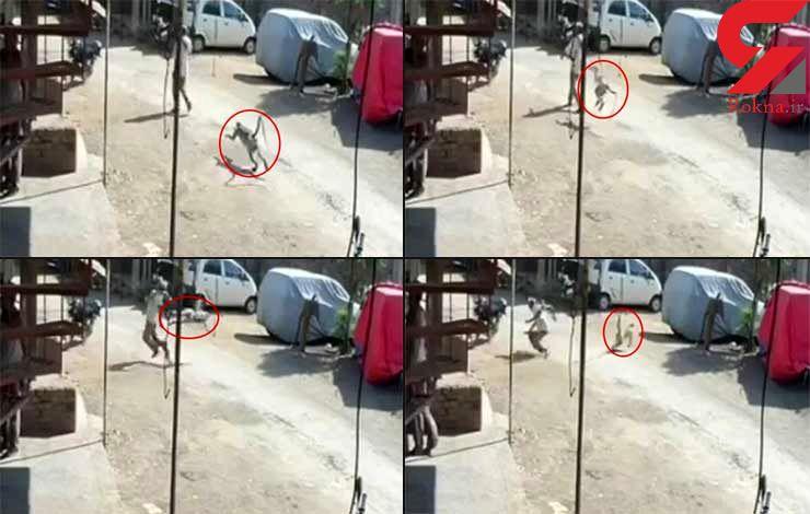 حمله عجیب و دیدنی میمون به یک مرد + تصاویر