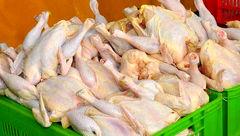 باز هم ردپای دولت در گرانی مرغ!