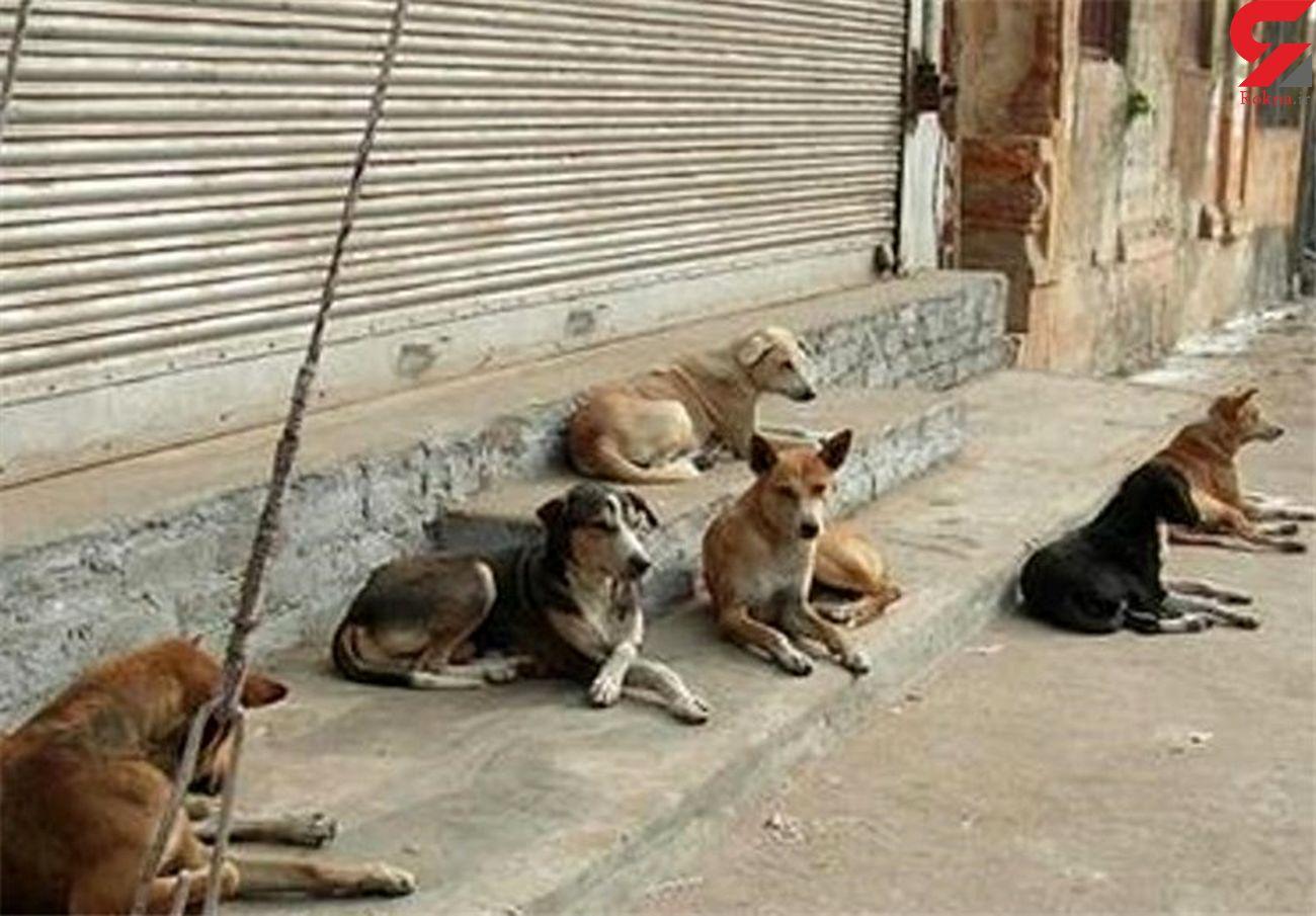 سگهای بلاصاحب بوشهر واکسینه شدند