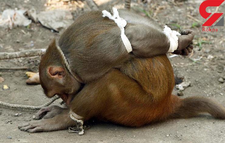 مزاحمت میمون ها در بمبئی