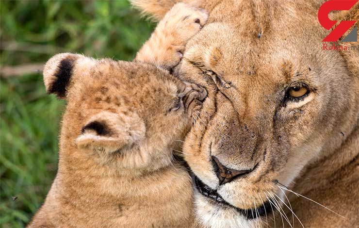 مهرورزی مادرانه